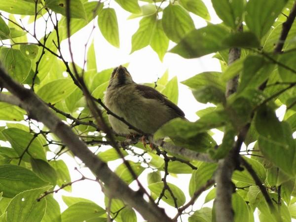 ○鳥2.jpg