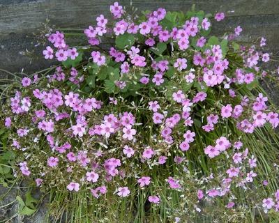 花いっぱい.jpg