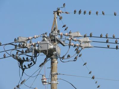 鳥1.jpg